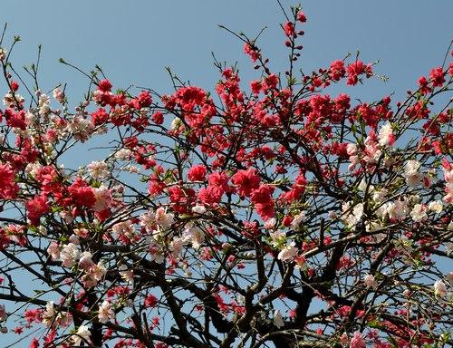 路傍の花、樹々の鳥(204) ~3ショット、2ショット~_b0102572_17581515.jpg