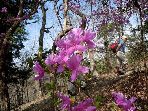 ポスト桜、山の主役、脇役は ・・・_b0102572_1813160.jpg