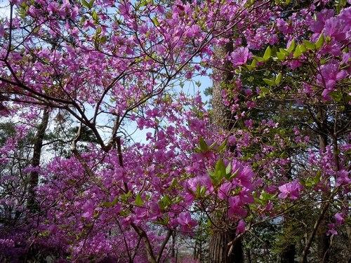 ポスト桜、山の主役、脇役は ・・・_b0102572_1814672.jpg