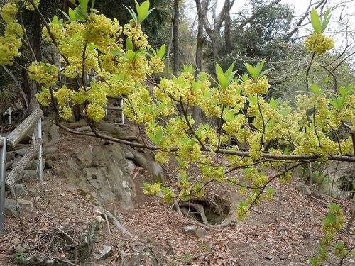 ポスト桜、山の主役、脇役は ・・・_b0102572_1834163.jpg