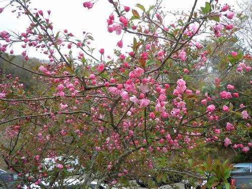 ポスト桜、山の主役、脇役は ・・・_b0102572_184286.jpg
