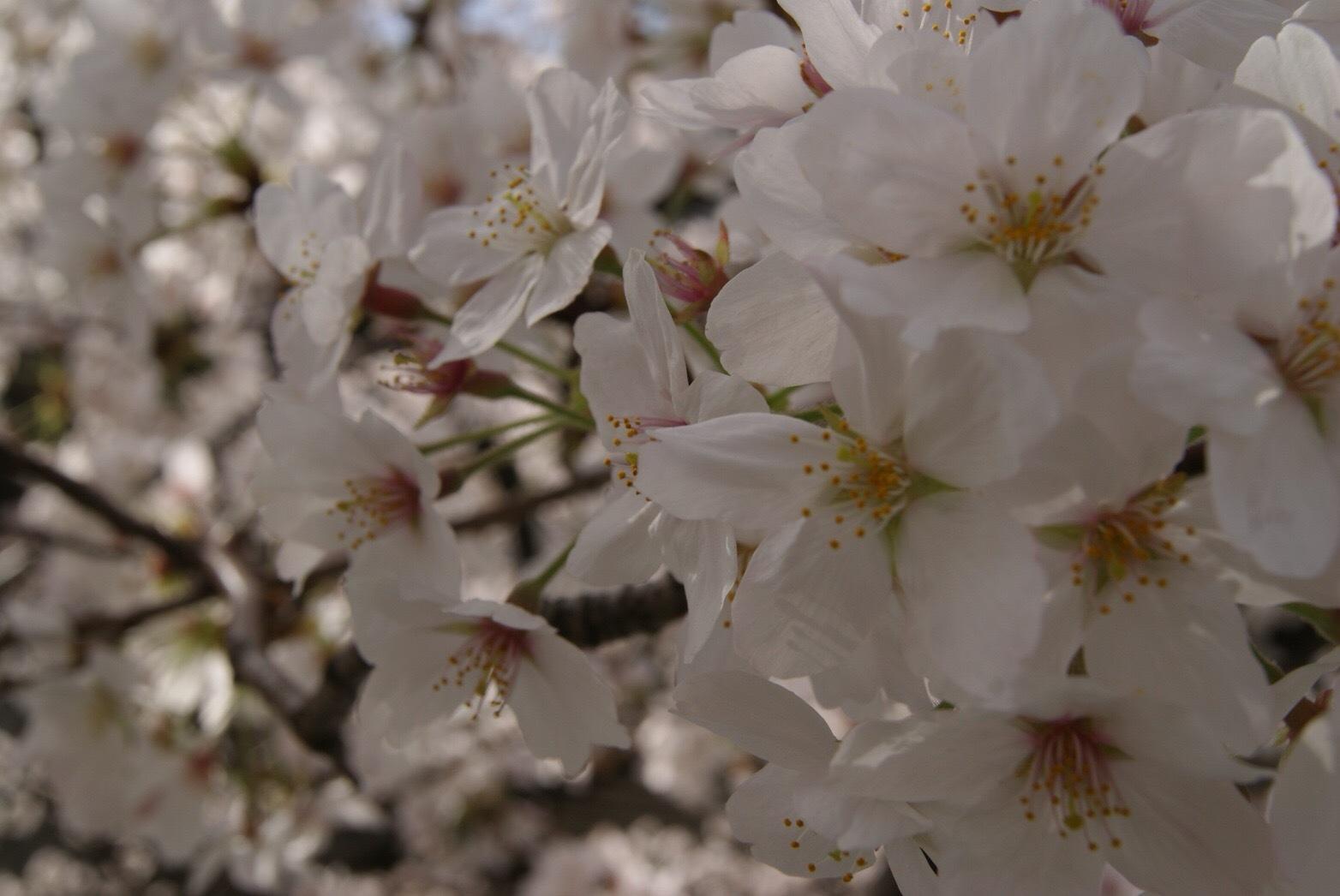 春ですね!!_c0231772_18355872.jpg