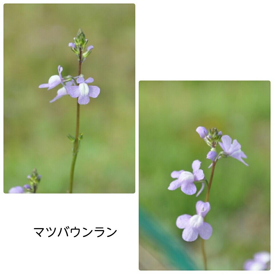 a0143388_11093602.jpg
