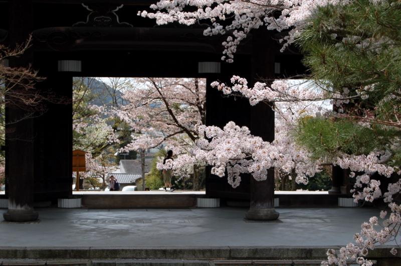 桜めぐり 黒谷さんから真如堂へ_c0057390_23184488.jpg
