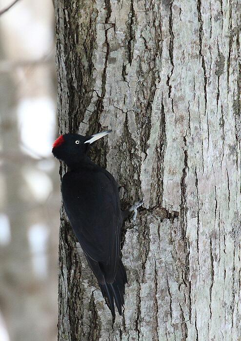 黒い羽がきれい~♪_c0113597_14114048.jpg
