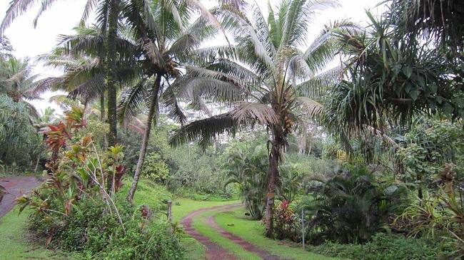 ハワイ島での料理教室_a0170699_21221112.jpg