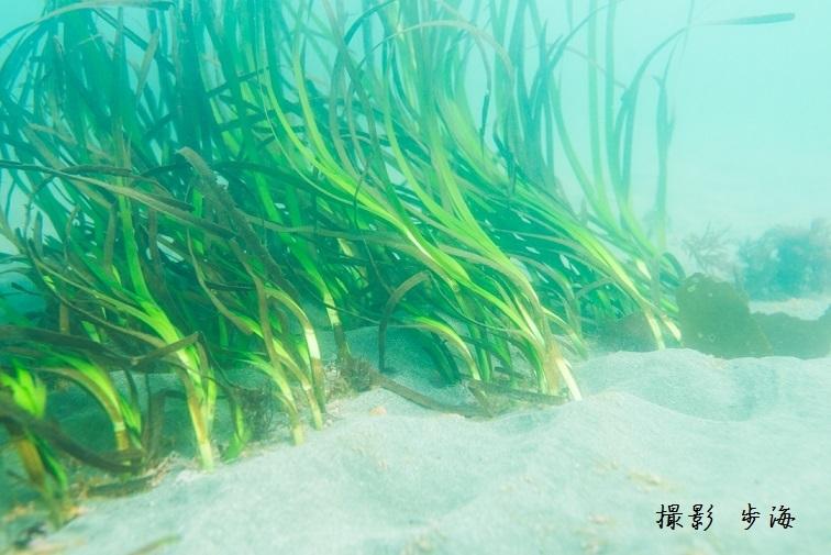 観音崎の海(2018年4月)_b0348205_23011992.jpg