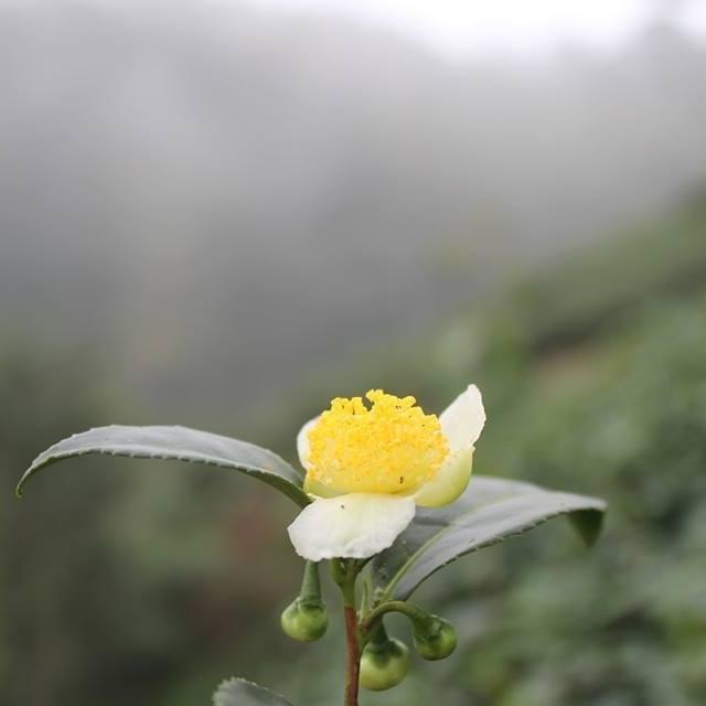 馨華献上銘茶 IN 三越銀座7Fリビング_f0070743_16395621.jpg