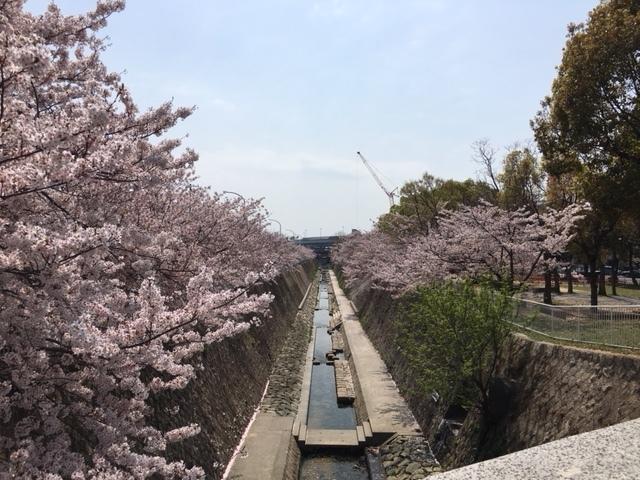 春ですね〜_e0209845_08232363.jpg