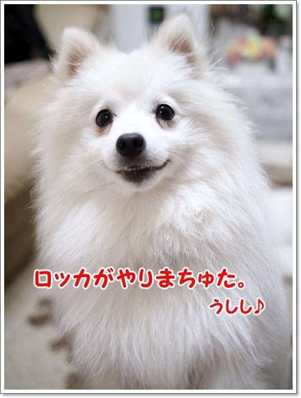 d0013149_00053915.jpg
