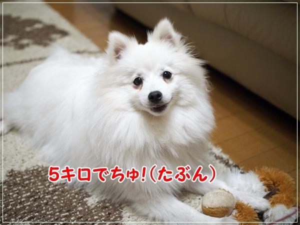 d0013149_23120067.jpg