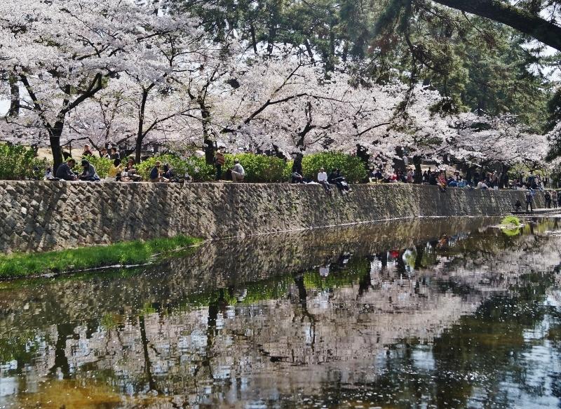 夙川公園の桜(7)夙川駅から苦楽園口駅へ_b0063958_23043376.jpg