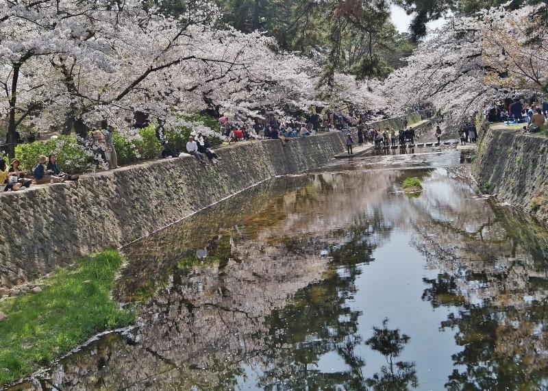 夙川公園の桜(7)夙川駅から苦楽園口駅へ_b0063958_23063953.jpg