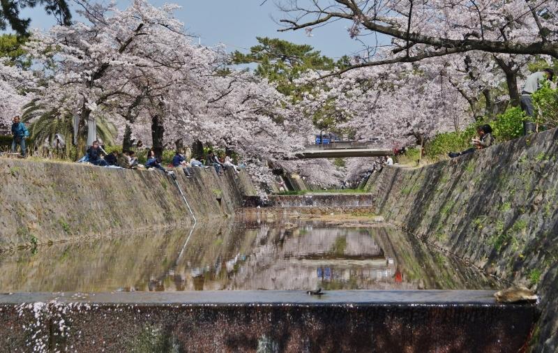 夙川公園の桜(7)夙川駅から苦楽園口駅へ_b0063958_23075144.jpg