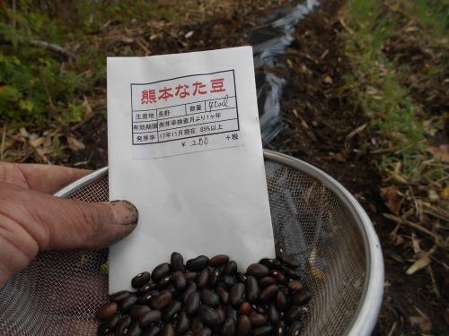 スイートコーン、熊本なたまめ 種まきしました_e0181260_20112719.jpg