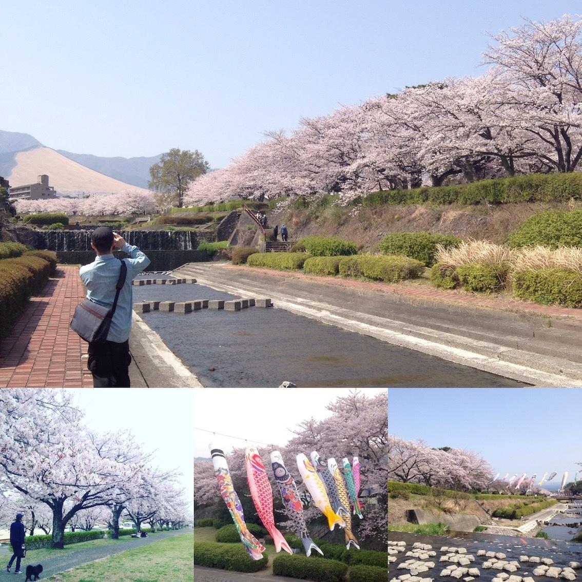 別府の桜スポット_d0069964_15085448.jpg