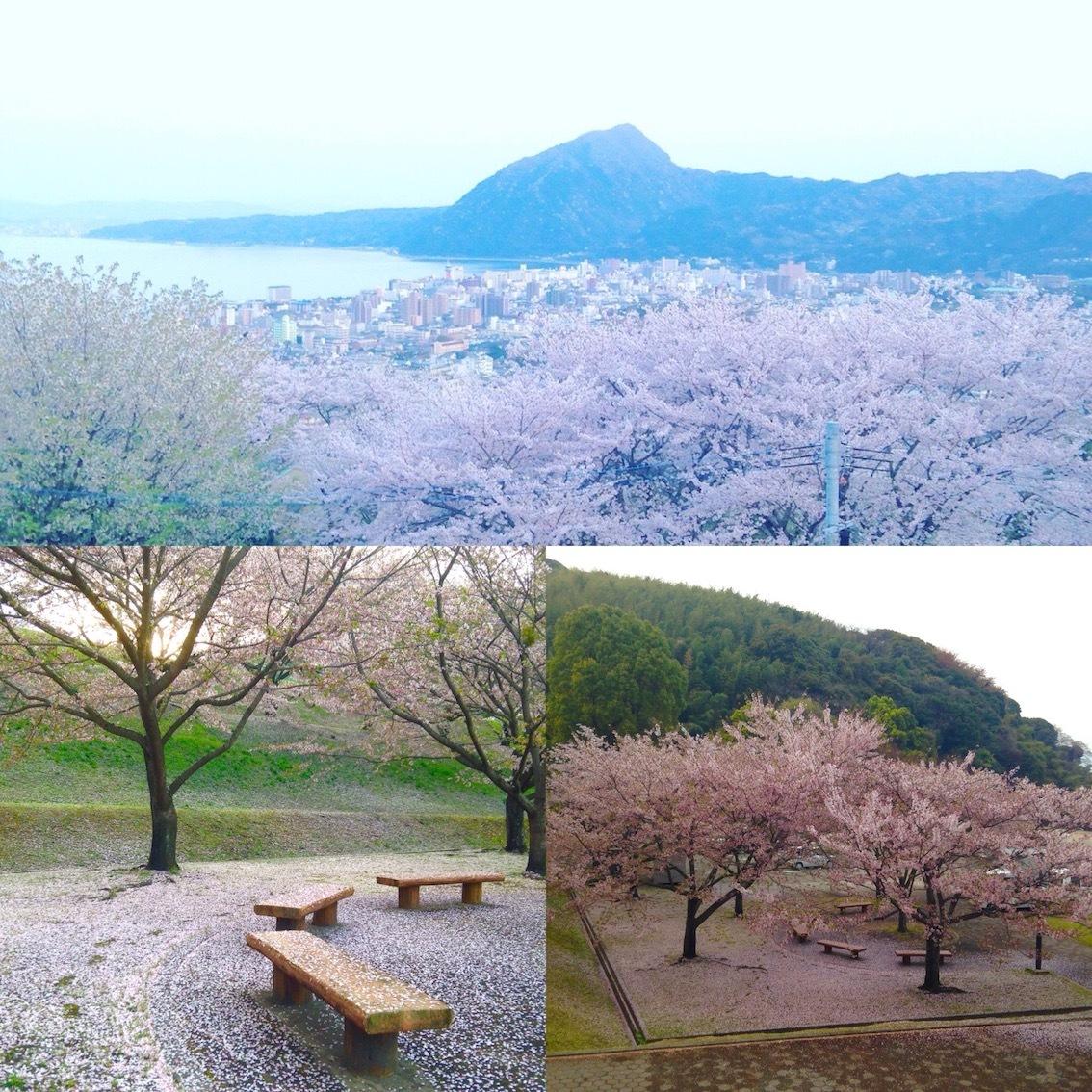 別府の桜スポット_d0069964_15280060.jpg