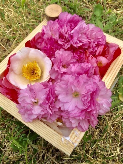 春の訪れ   (箱作りとお花)の巻_d0105967_22233502.jpg