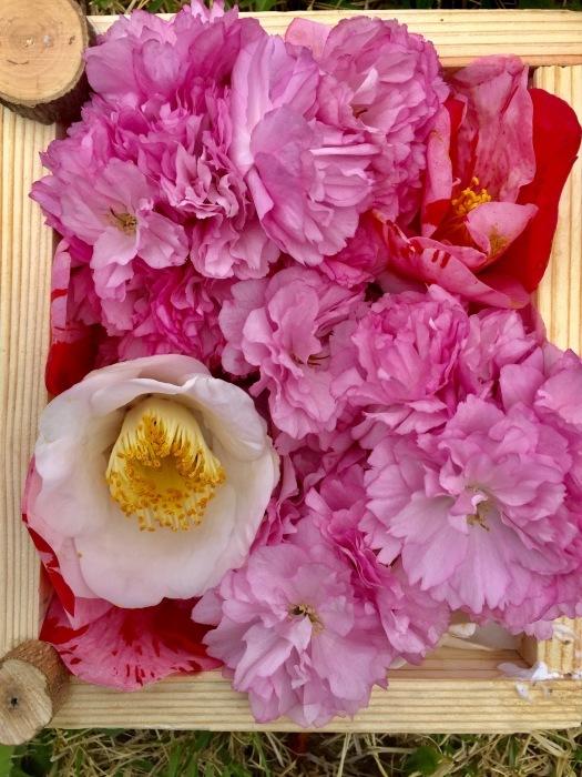 春の訪れ   (箱作りとお花)の巻_d0105967_22241240.jpg