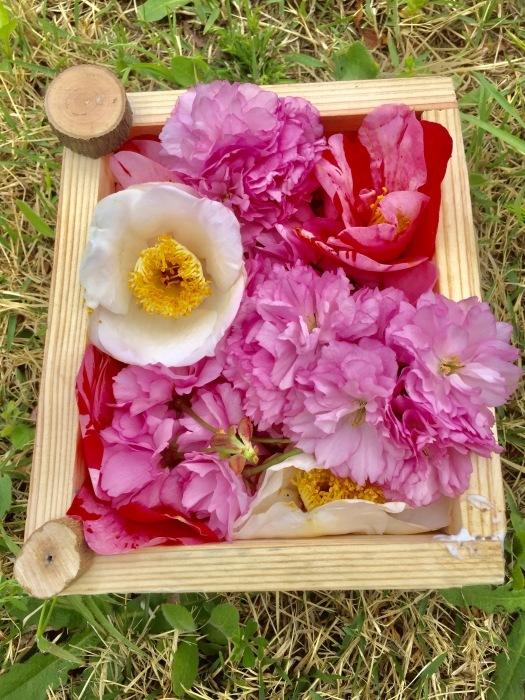 春の訪れ   (箱作りとお花)の巻_d0105967_22440185.jpg