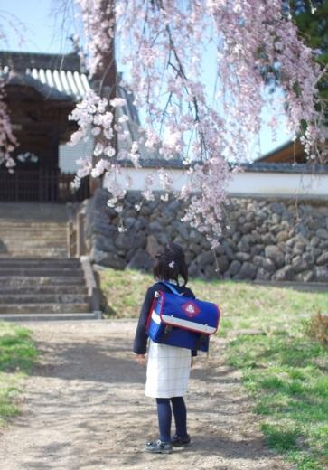 立科の桜が見ごろ。_c0110869_17592245.jpg