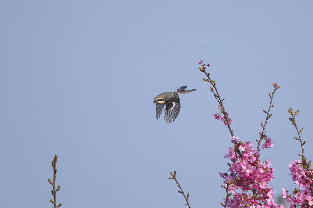 花の郷の小鳥達_d0125872_22252816.jpg