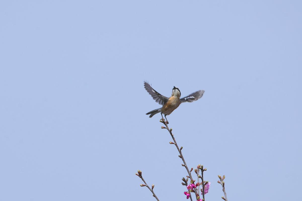 花の郷の小鳥達_d0125872_22263506.jpg