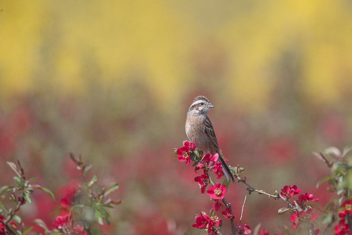 花の郷の小鳥達_d0125872_22324827.jpg