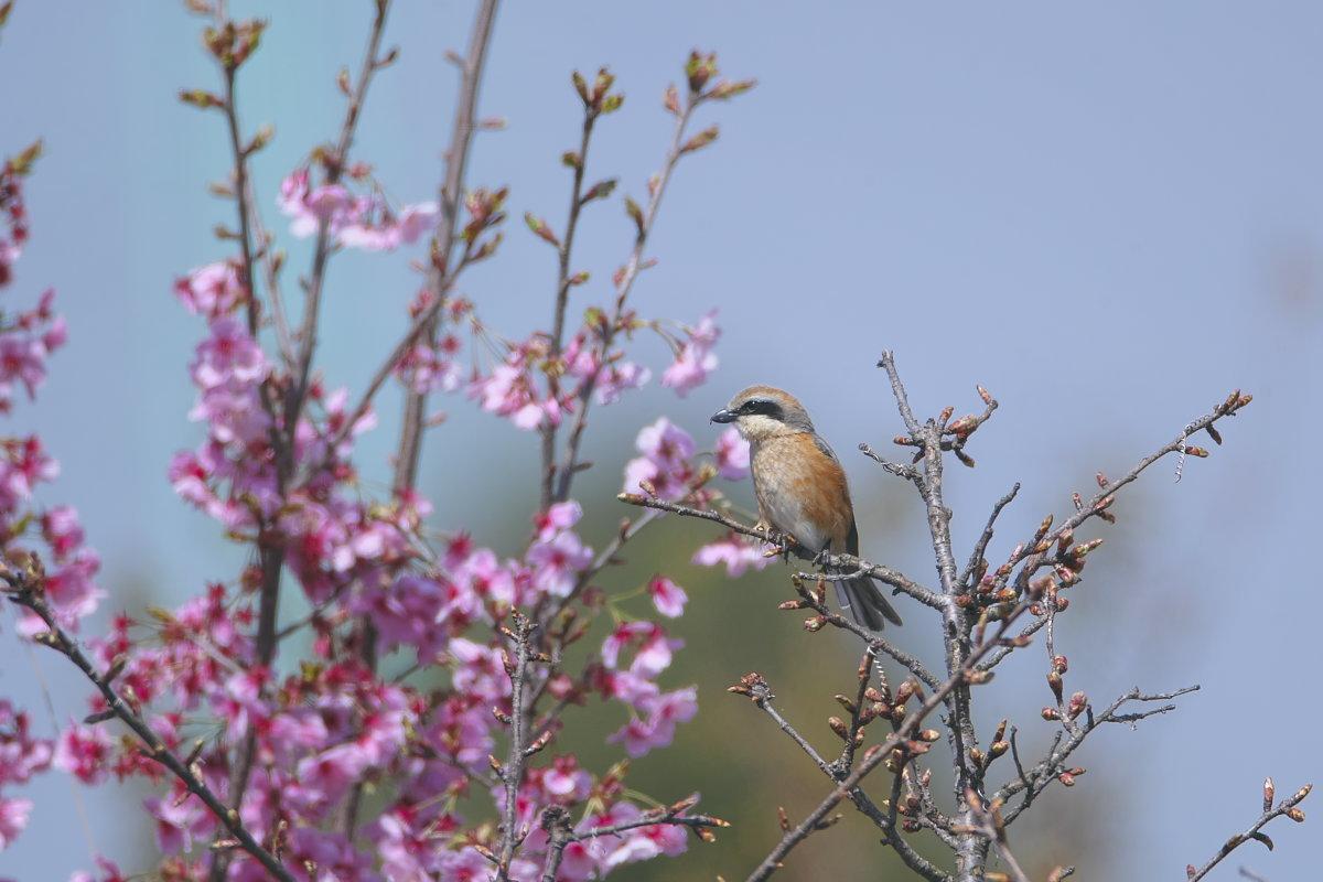 花の郷の小鳥達_d0125872_22334322.jpg