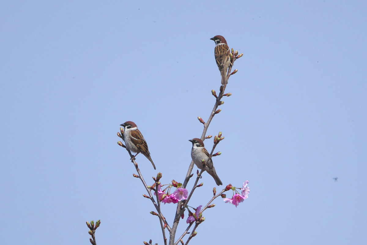 花の郷の小鳥達_d0125872_22513996.jpg