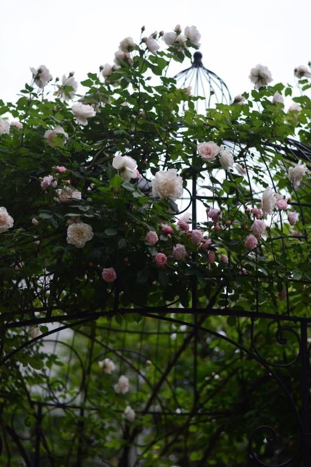 妖精たちのティーパーティ お散歩編 _a0252678_15235090.jpeg