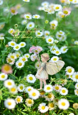 妖精たちのティーパーティ お散歩編 _a0252678_15521434.jpg