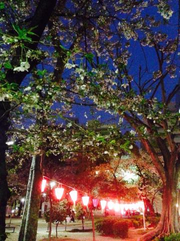 夜桜_e0055098_11355780.jpg