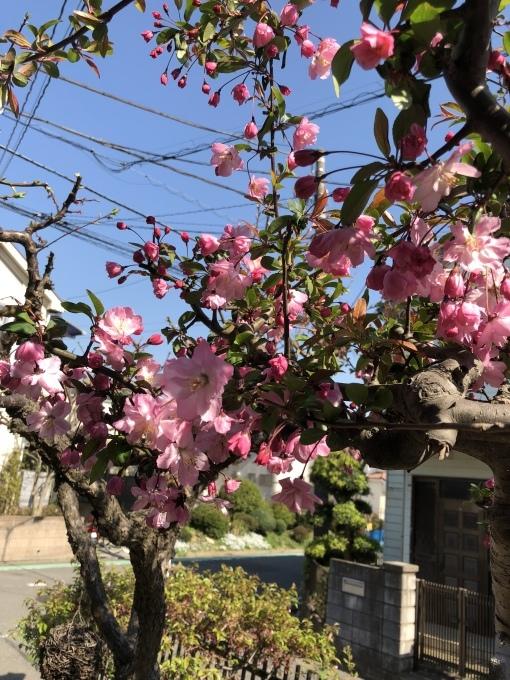 春一番‼︎_e0150507_08111900.jpeg