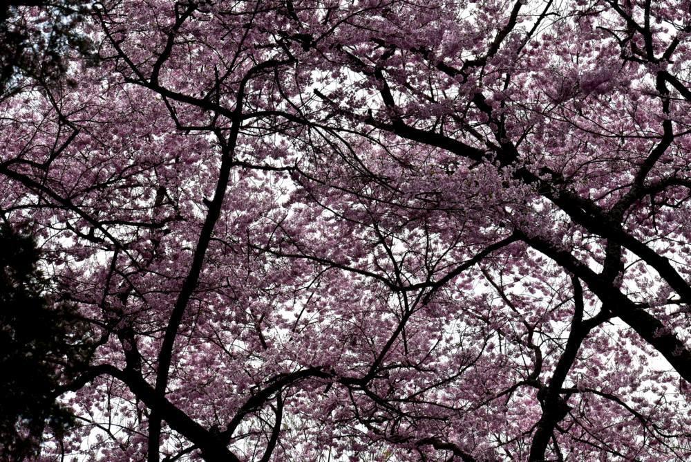 f0212511_10192041.jpg