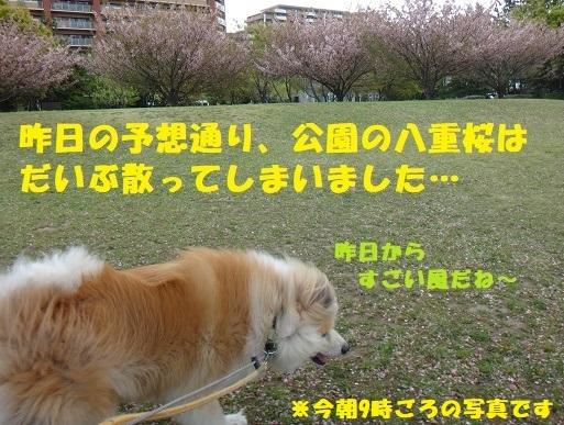 f0121712_22053040.jpg