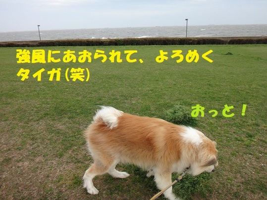 f0121712_22243362.jpg