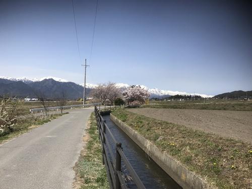 北アルプスと桜_c0218716_1874360.jpg