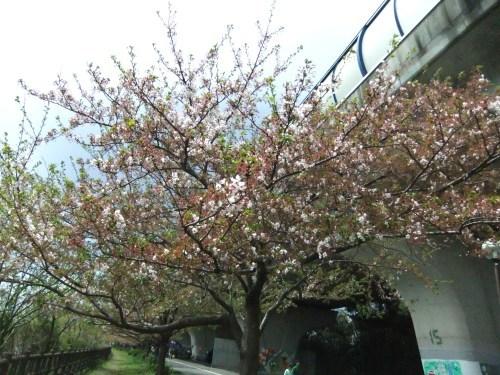 桜祭り.._b0137932_15044528.jpg