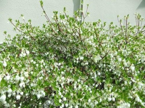 桜祭り.._b0137932_15081143.jpg