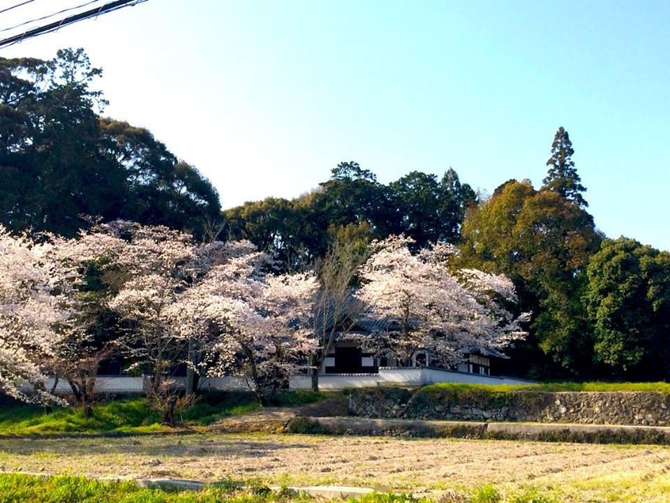 2018桜日記.1_f0206741_08343000.jpg