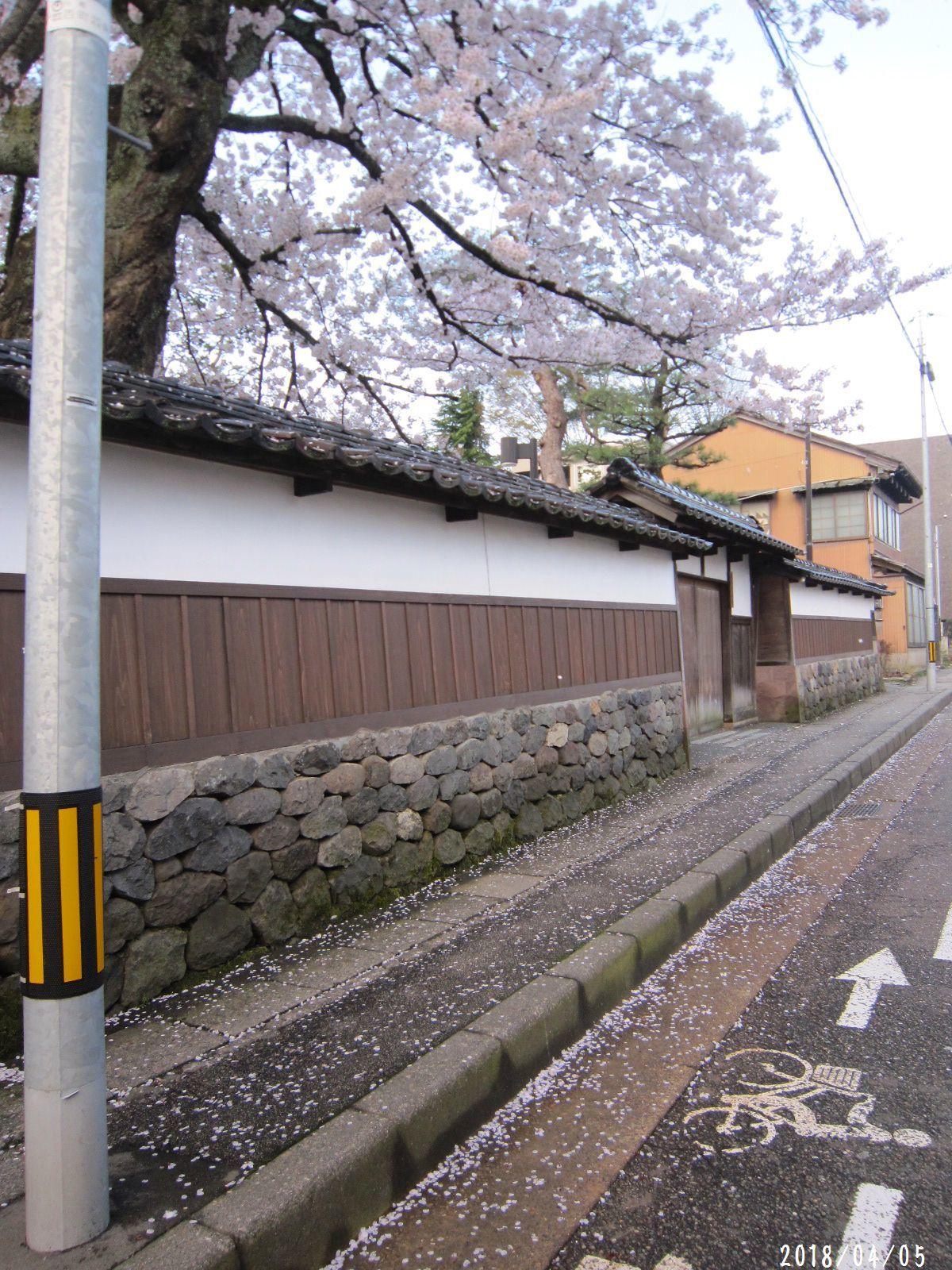 桜だより❀ 満開です❀ (4月7日 追記あり)  _a0207574_09174408.jpg