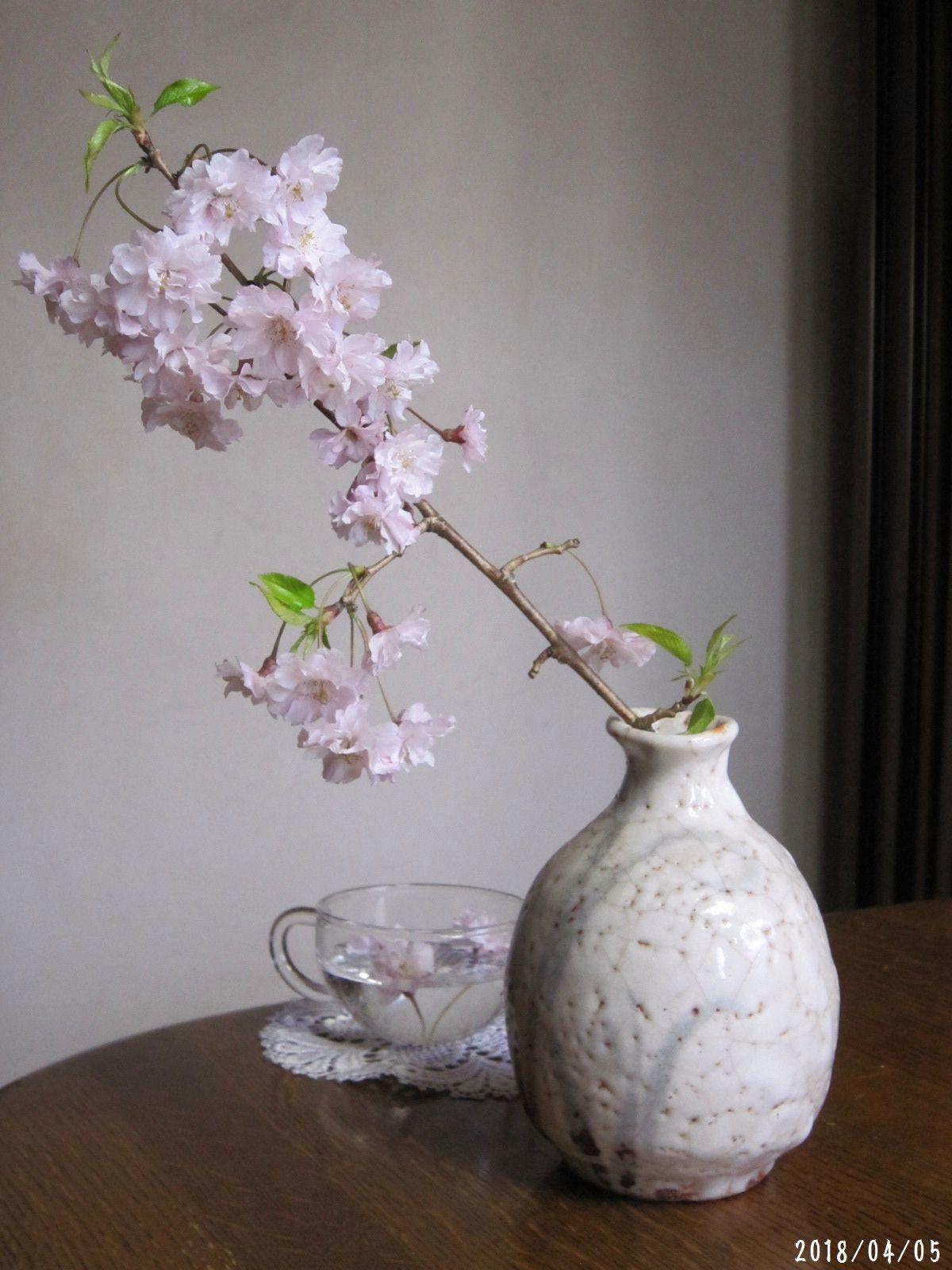 桜だより❀ 満開です❀ (4月7日 追記あり)  _a0207574_09291819.jpg
