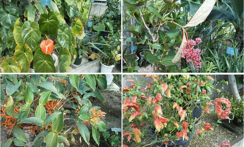 北大植物園温室にて_f0078286_11295606.jpg