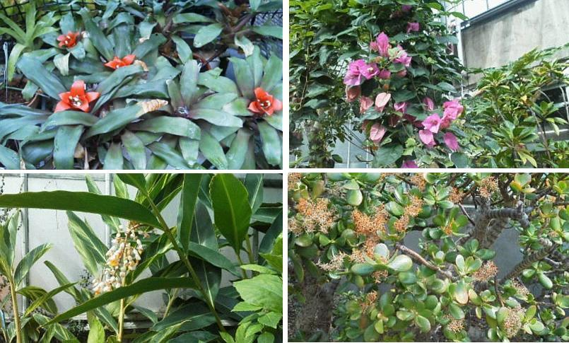 北大植物園温室にて_f0078286_11303560.jpg
