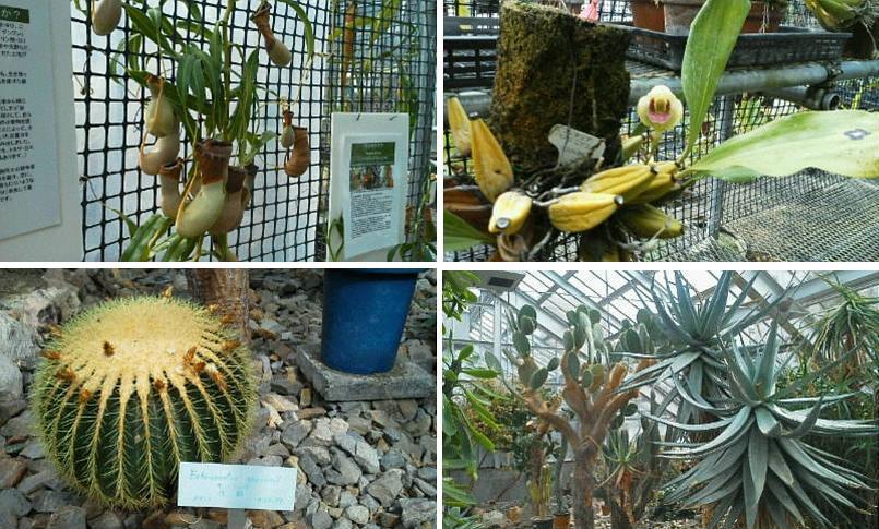 北大植物園温室にて_f0078286_11310570.jpg