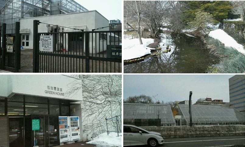 北大植物園温室にて_f0078286_11313636.jpg