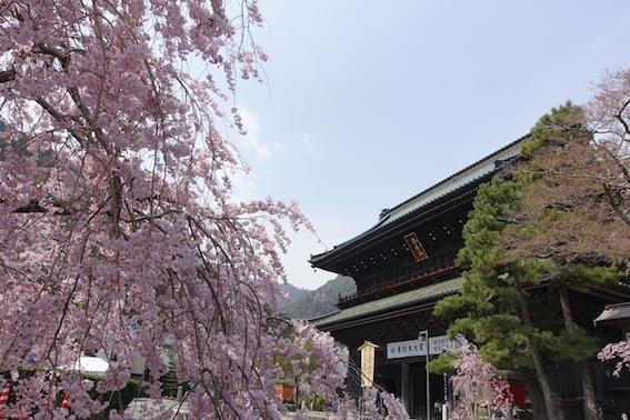 山梨の桜_f0230689_11260169.jpg