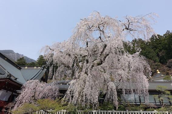 山梨の桜_f0230689_11260432.jpg