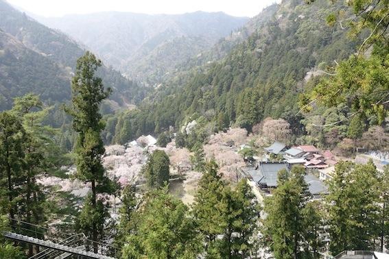 山梨の桜_f0230689_11260993.jpg